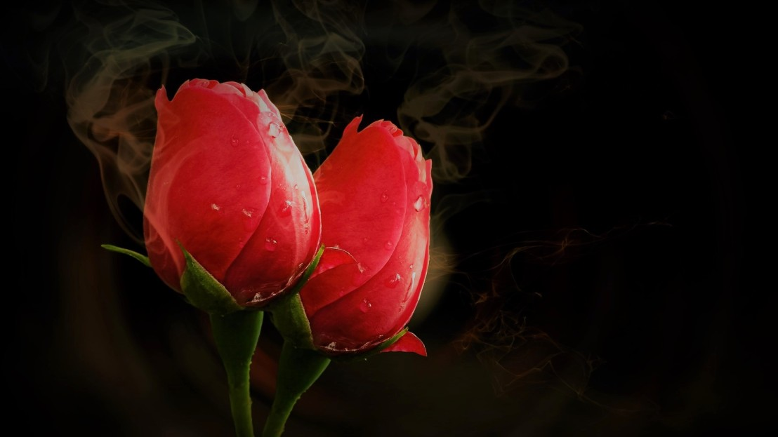 Two roses and smoke in a glow